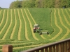 silage-cutting