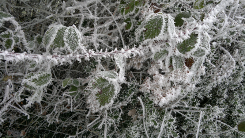 frost-crystals