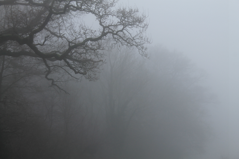 trees-in-the-mist