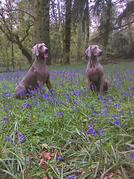 may-the-month-of-bluebells-2012