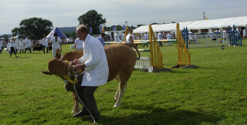 cattle-parade-11