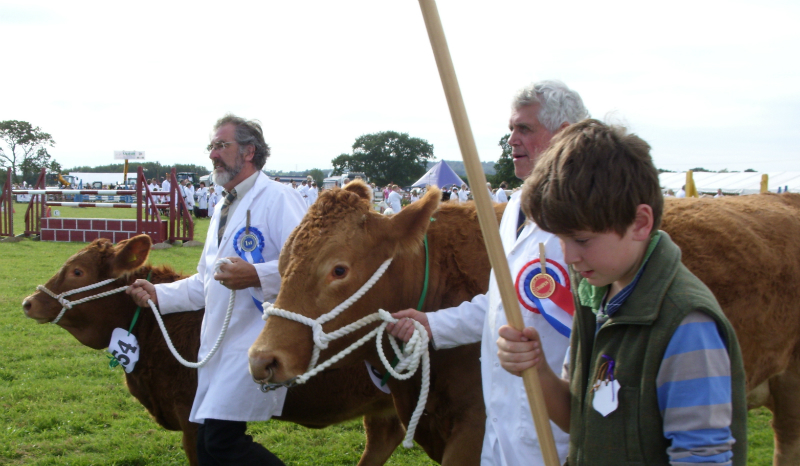 cattle-parade-4