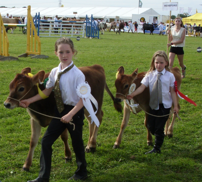 cattle-parade-5